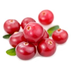 CRANBERRIES AMERICANI